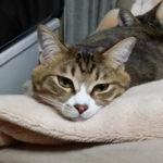 猫の日【2月22日】│国際猫の日は8月8日