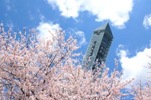 桜-東山動植物園