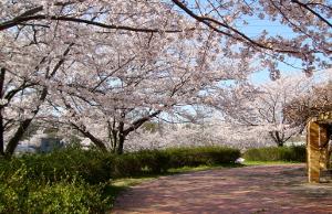 桜-大高緑地公園
