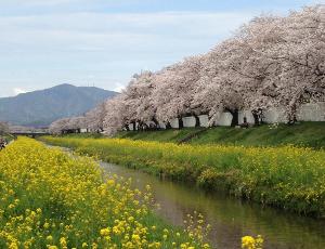 桜-佐奈川